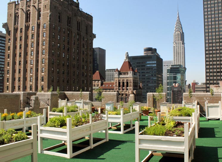 Sogar das legendäre Waldorf=Astoria baut Kräuter an und gewinnt seinen eigenen Frühstückshonig auf dem Dach